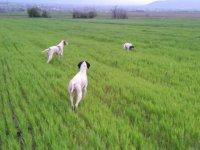 Psi na tragu