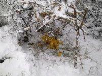 Zimska prihrana divljači - Majdevo